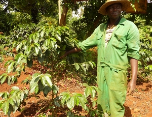 Peepoo fertiliser delivers bountiful yields to farmers in Kirinyaga, Kenya